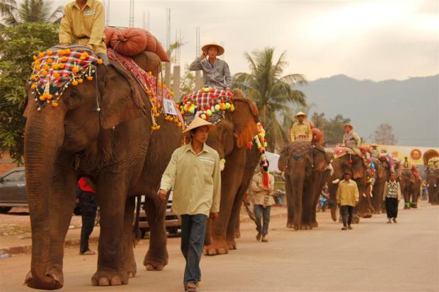 elephant-festival-laos